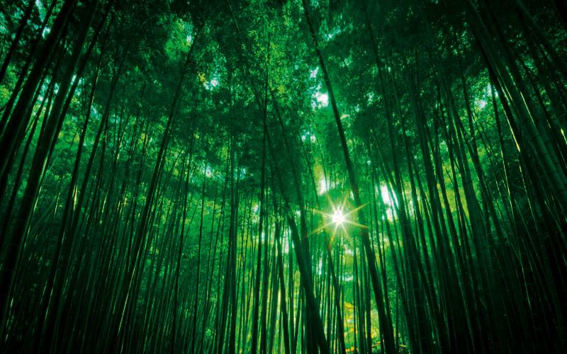 La cultura Green di Ad Dal Pozzo